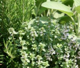 aliquota_iva_piante_aromatiche